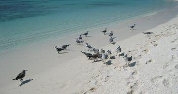 Los Roque es el único archipiélago coralino del Caribe Sur y pertenece a Venezuela