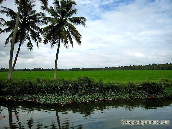 Los backwaters de Kerala alimentan los arrozales de los que se obtiene el sustento de las poblaciones locales.
