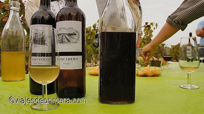 En los alrededores de Cádiz puedes ver bodegas de vinos de Jerez