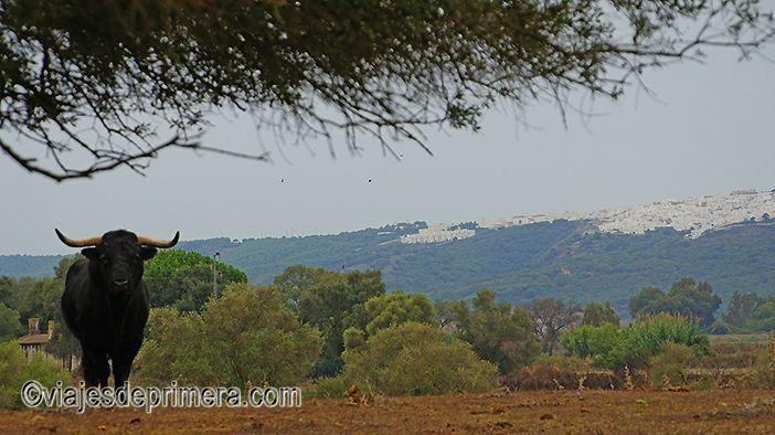 En los alrededores de Cádiz también puedes visitar lugares relacionados con la cultura del toro