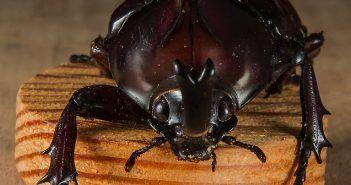 Comer insectos es una práctica habitual en muchos países de Asia, América y África