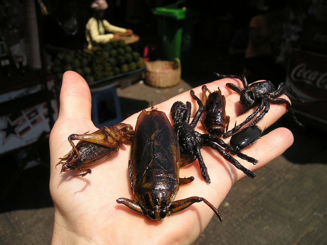 La ONU recomienda comer insectos por su aporte proteínico, su bajo coste de producción y su reducido impacto medioambiental