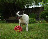 Viajar con mascotas, el primer buscador de agencias pet friendly de España