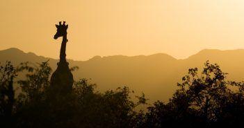 Un viaje a Sudáfrica te permitirá hacer mucho más que un safari por el Parque Kruger