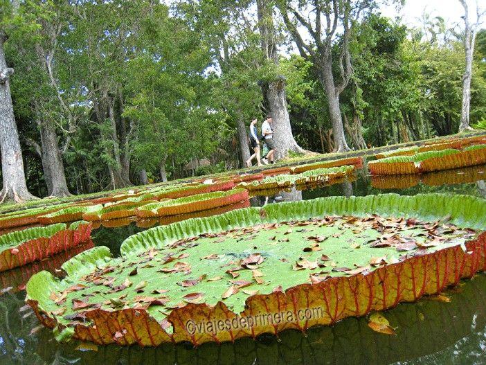 Sitios que ver en Isla Mauricio: Jardines Pamplemousse en Port Louis