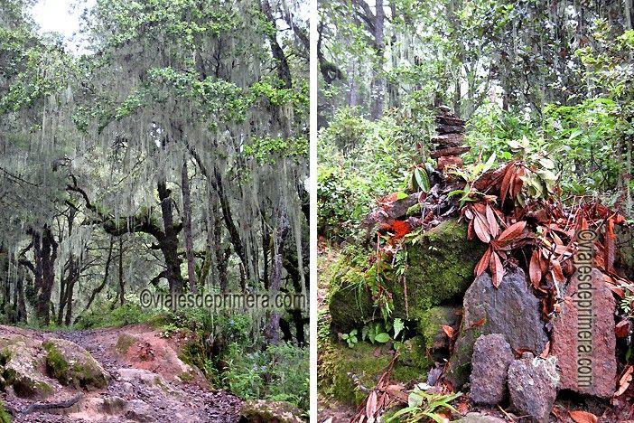 Los bosques del Valle de Paro, por los que atraviesa la ruta de peregrinación al Nido del Tigre, en Bután, son casi vírgenes