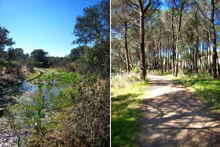 El Canal de Guadarrama todavía se puede seguir durante algunos kilómetros entre Galapagar y Las Rozas, en Madrid.