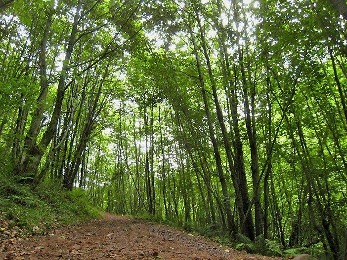 Los bosque se alternan con pequeñas gargantas que hacen que el Desfiladero de las Xanas sea considerado el hermano pequeño de la Ruta del Cares, también en Asturias