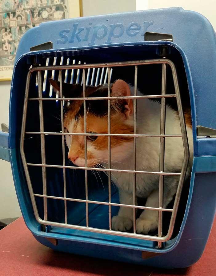 Qué llevar en el equipaje facturado, mascotas y animales domésticos