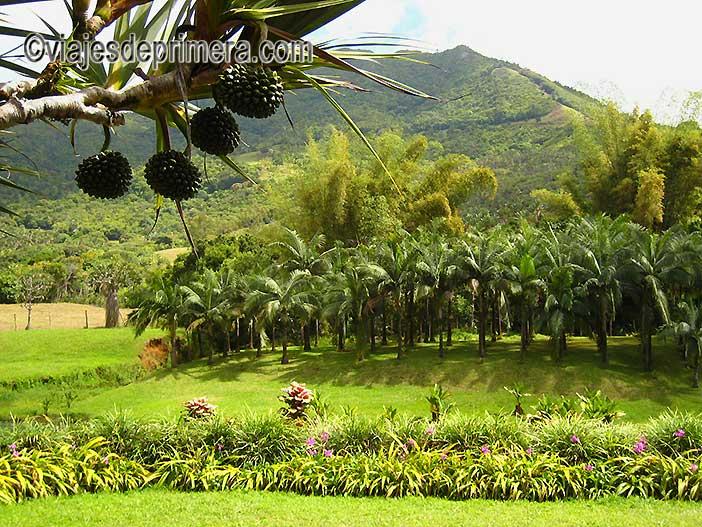 Excursiones-en-Isla-Mauricio-a-Le-Domaine-de-L`Etoile-reserva-natural-más-grande-de-Mauricio